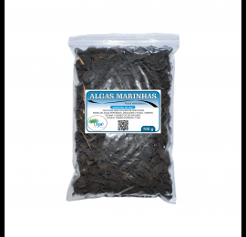 Algas Marinhas ( Fucus vesiculosus L. - Alga)